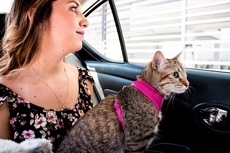 Cabify Pet viajando con tu gato